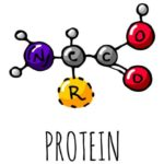Что такое протеин
