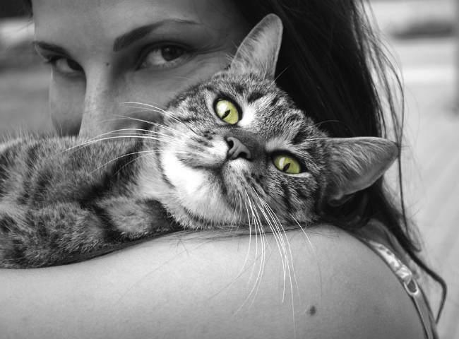 Кошачья терапия