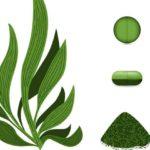 Водоросли спирулина — полезные свойства и противопоказания