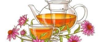 Чем полезен чай из эхинацеи
