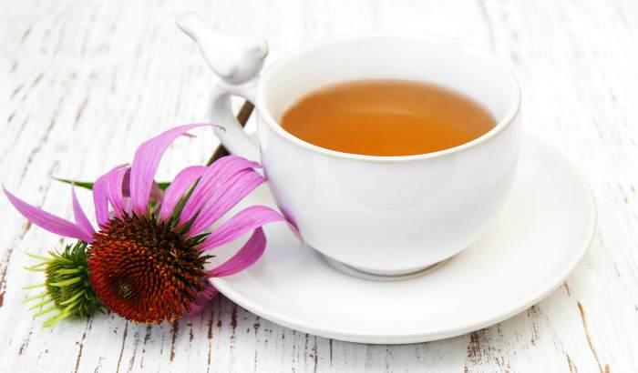 Чай из эхинацеи для иммунитета
