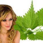 Эффективные рецепты масок для волос из крапивы