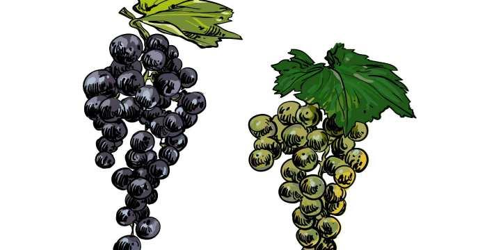Виноградная диета для очищения организма