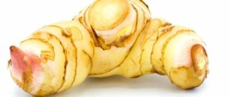 Применение корня калгана в народной медицине