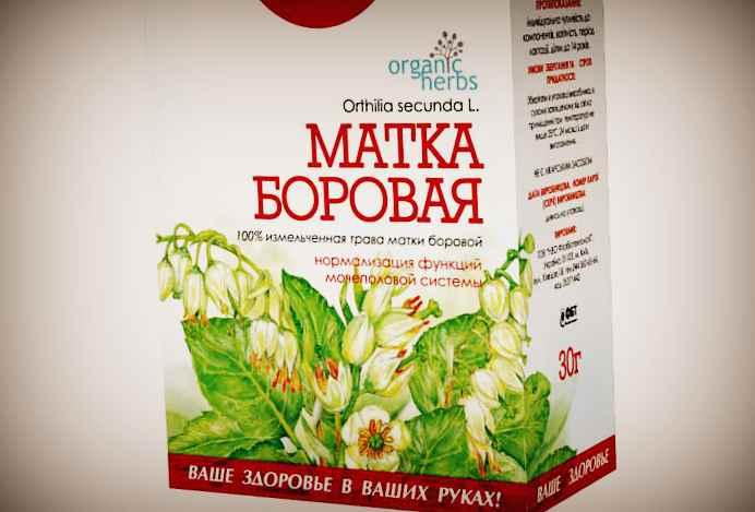 Фиточай - Матка Боровая