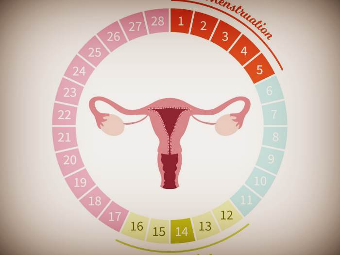 Как влияет эстроген на овуляцию