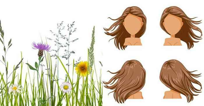 Травы для восстановления волос