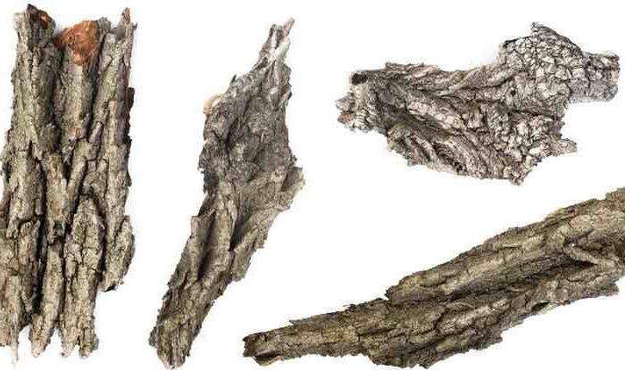 Химический состав и полезные свойства коры дуба