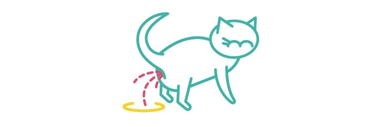 Как избавится от кошачьего запаха мочи