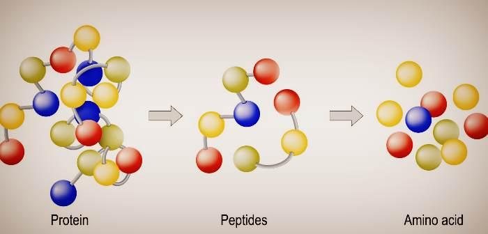 Какие бывают аминокислоты