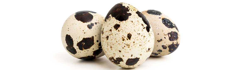 Сырые перепелиные яйца